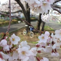 【2003 DAHON BOARDWALK】「SAKURA×DAHON PHOTO CONTEST 2014 SPRING」 撮影 第一弾