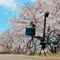 【2003 DAHON BOARDWALK】 「SAKURA×DAHON PHOTO CONTEST 2014 SPRING」 撮影 第二弾