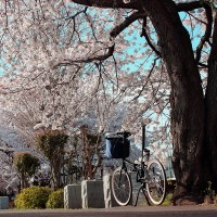 【2003 DAHON BOARDWALK】「SAKURA×DAHON PHOTO CONTEST 2014 SPRING」 撮影 第三弾