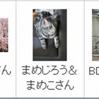 にほんブログ村 新着記事画像がうまく表示されませんヽ( ;´Д`)ノ